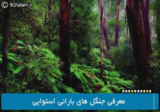 معرفی جنگل های بارانی استوایی